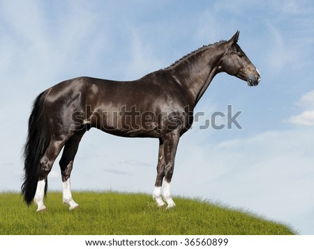 black horse on the blue and green background, on the meadow