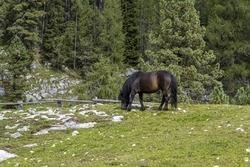 black horse relaxing in dolomites mountains