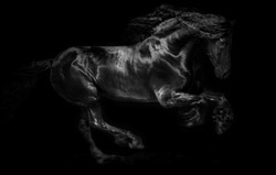 Black horse running free