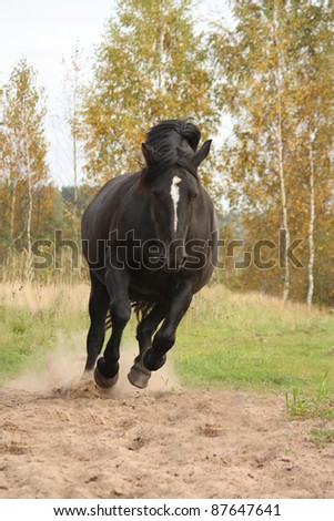 Black horse running in the wild in autumn
