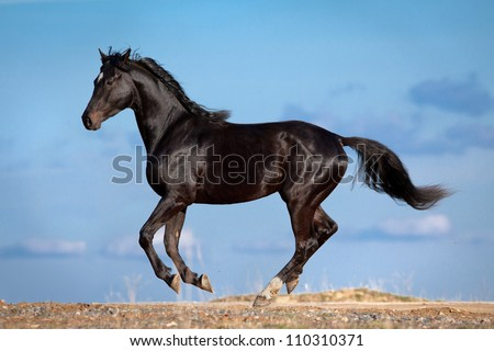 Black horse running on blue sky with clouds. - stock photo