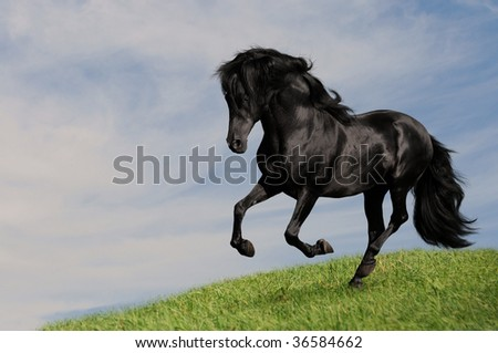 black horse stallion run gallop on the meadow, collage paint - stock photo