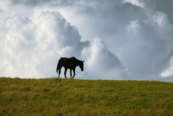 Black horse walking away on the horizon