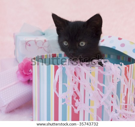 black kitten in a birthday box