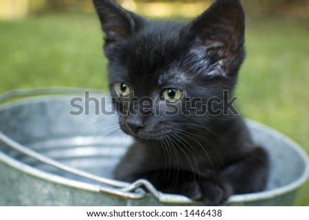 black kitten in bucket