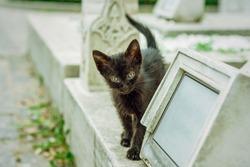 Black kitten in historic cemetery, Istanbul, Turkey