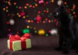 Black kitten near Christmas decorations, new year present and luminous garlands. Selective focus.