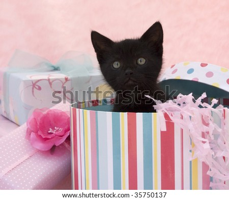 black kitten popping out of a birthday box