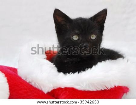 black kitten sitting in a santa hat