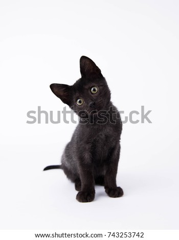 Black Kitten Sitting on White Background