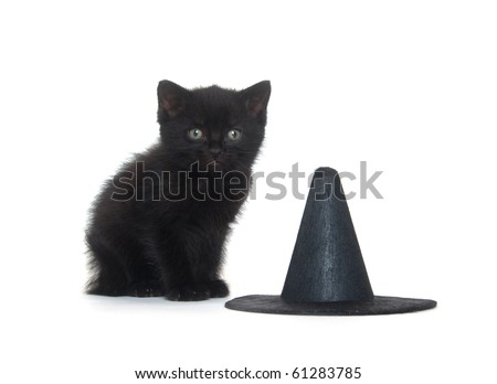 Black kitten sitting on white background with witch hat for Halloween