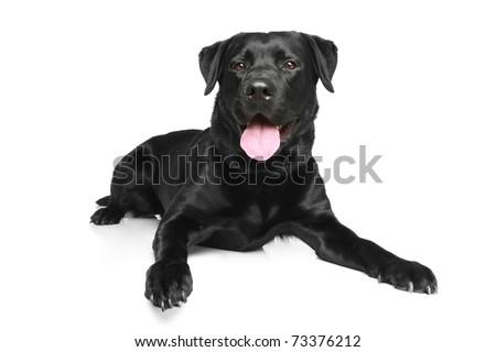 Black dog lying on back - photo#19