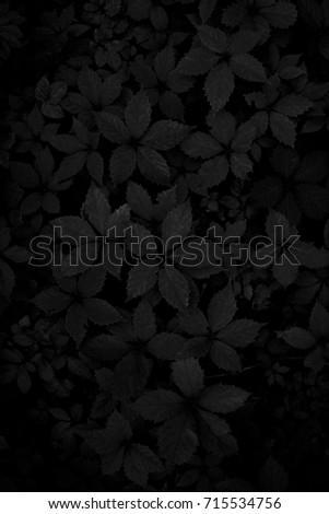 Black leaves. Dark wallpaper