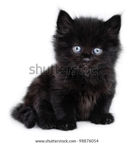 Black little kitten sitting down on a white background