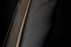 Black macro featherมBlack raven feathers ,Serbia, Feather, Macrophotography, Black Color, Gray Color,Raven feather in macro view ,Feather, Germany, Backgrounds, Bird, Black Color,Abstract, Art,