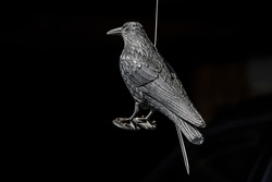 Black metalic bird and black background