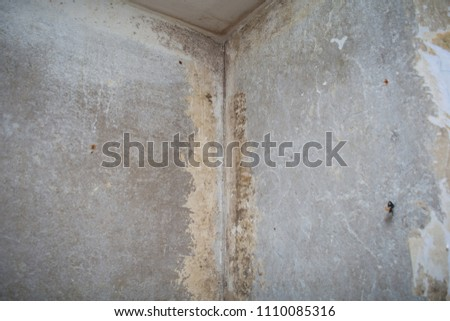 Free Photos Black Mold Buildup In The Old Wall House Avopix Com