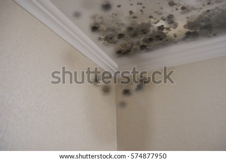 black mold damage to home