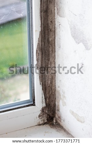 Black mold on a plastic window closeup