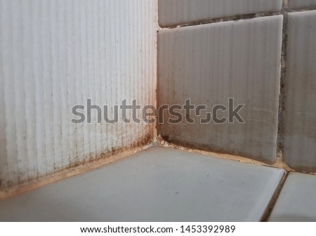 Black mold on dirty tile wall in wet bathroom. To let the stain of lichen or fungus grow in toilet 's corner is not hygiene. Better to clean the house to prevent bacteria. Cleaning service concept.