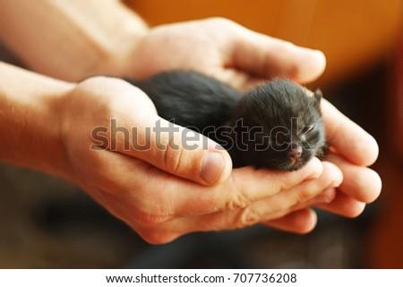 Black newborn kitten breed of European forest lies in man's hands