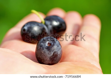 Black olives on hand .