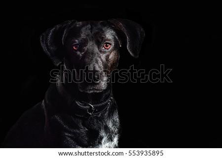 black on black - black dog on black background #553935895