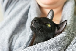 Black oriental cat and woman staing home during quarantine. Cozy lifestyle home concept