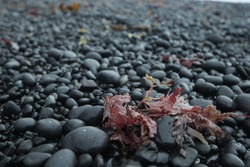 Black pebble an the costs of Iceland