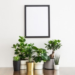 Black photo frame on white wall mock up and house plants in different design flower pots.