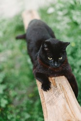 Black playful cat sharpening its claws on a wooden plank against a background of grass.