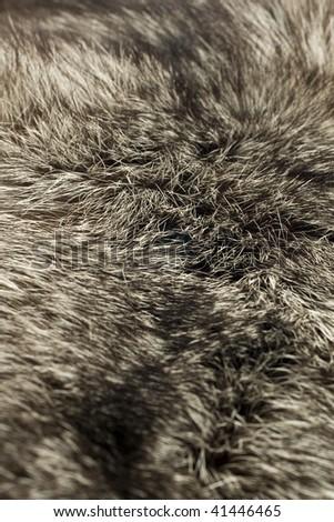 Black Polar Fox fur. Useful as background (Shallow DOF)