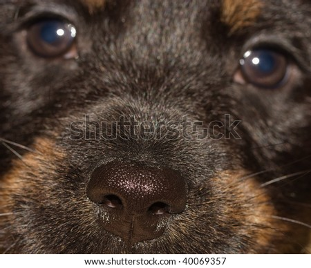 black puppy, a fragment of faces at close range, with a focus on the nose