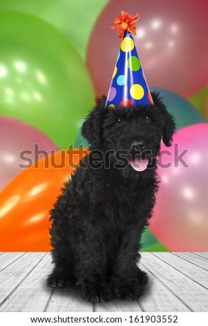 Black Puppy Dog With a Birthday Celebration Theme