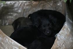 Black puppys, street cute pups, adorable small dogs, mongrel pups, homeless sad pups, pets on street.