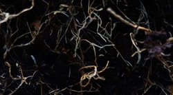 Black, purple and grey abstract nature background texture of  tree roots Seamless pattern spot metering