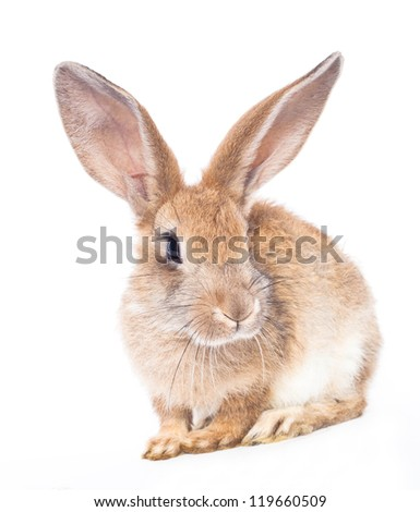 Black rabbit with bow isolated on white background