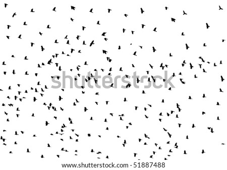 Black raven (crow) fly on sky background