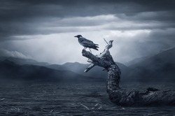 Black raven in moonlight perched on tree. Scary, creepy, gothic setting. Cloudy night. Halloween