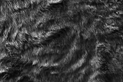 Black real wool with a dark top texture background, dark natural sheep wool, gray seamless cotton, fluffy fur texture for designers, close-up grey wool rug