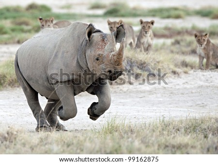 Black Rhino Escape