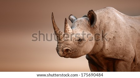 stock photo black rhinoceros portrait diceros bicornis salt pans of etosha national park namibia 175690484 - Каталог — Фотообои «Животные»