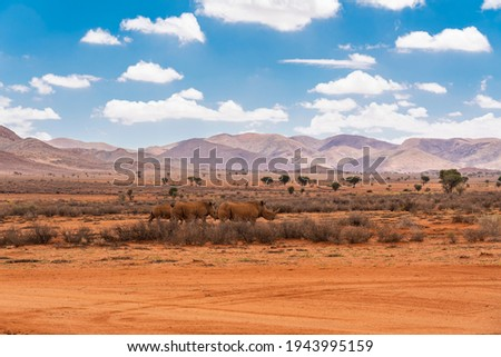 Black rhinos in the evening light at the savana in Namibia, background mountain landscape with blue sky and clouds Foto stock ©