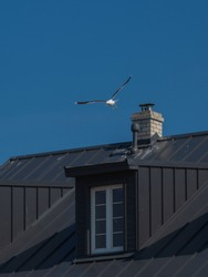 Black roof of the main building of  Sõrve lighthouse in Saaremaa island, Estonia. Seagull in flight over the white chimney