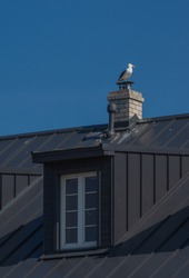 Black roof of the main building of  Sõrve lighthouse in Saaremaa island, Estonia. Seagull perched on top of the white chimney