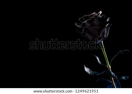 black rose on a black background. Space for text #1249621951