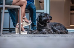 Black schnauzer dog lying at the feet of its male and female owner with only their legs visible (Budapest, Hungary)