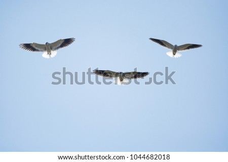 Black-shouldered Kite flying on sky #1044682018