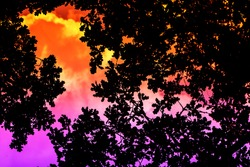 Black silhouette of a tree on orange to violet gradient background, summer sky during the heat. Stoner, sludge concept.