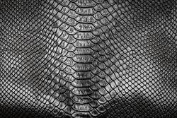 Black snake skin pattern texture background